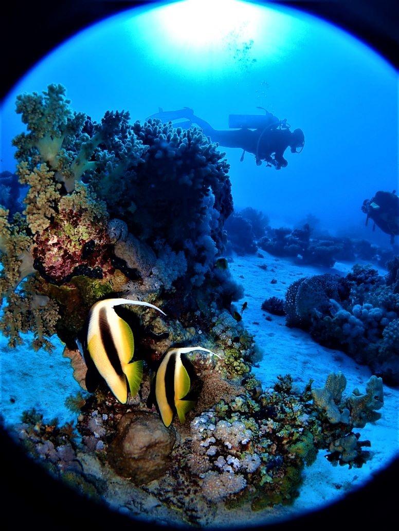 Buceadores en Mar Rojo